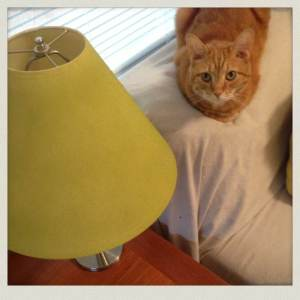 bon jovi and my green lampshade