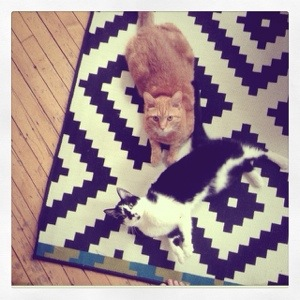 cats on a rug