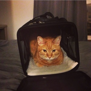 At least Bon Jovi likes his cat carrier