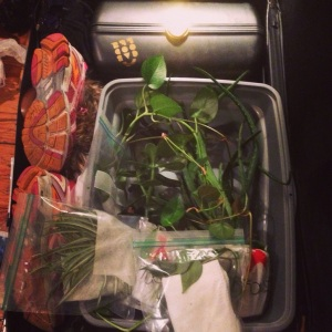 This is one of my checked bags. I managed to bring a few plants!